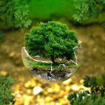Novaenergie per la riforestazione